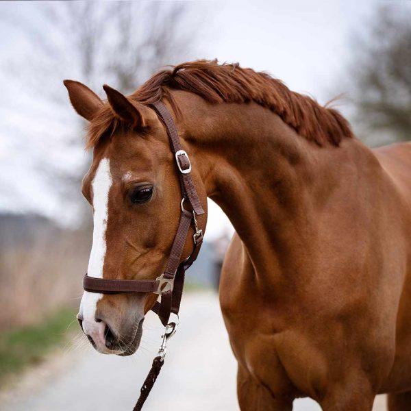 Meggy HorseEffect